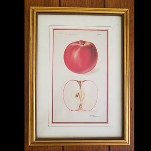 Antique framed color fruit lithographic c1911